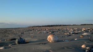shells_crolley
